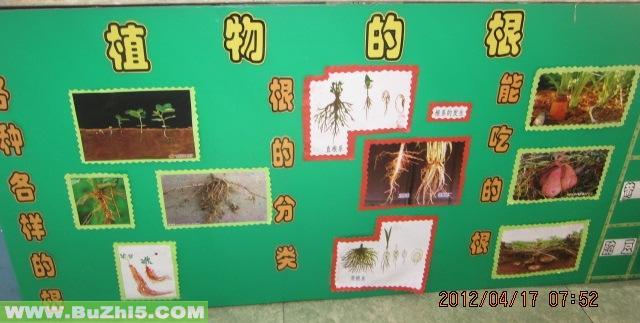植物的根自然角布置